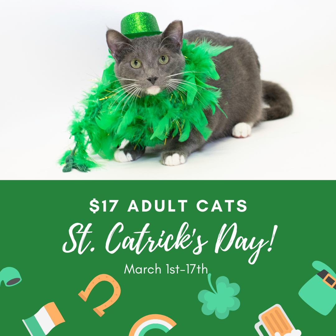 St. Patrick's Day is right around the corner!