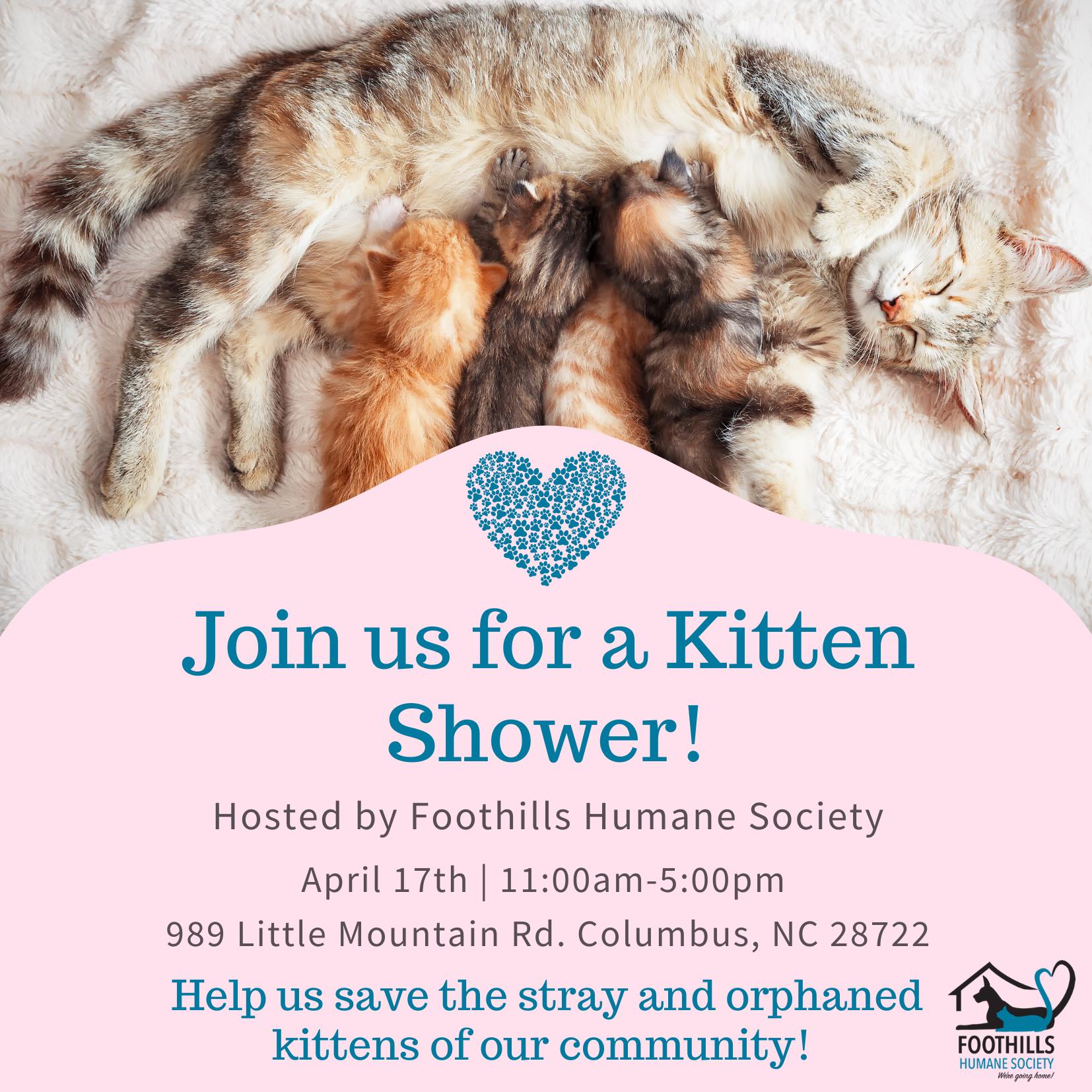 Foothills Humane Society Hosts Kitten Shower