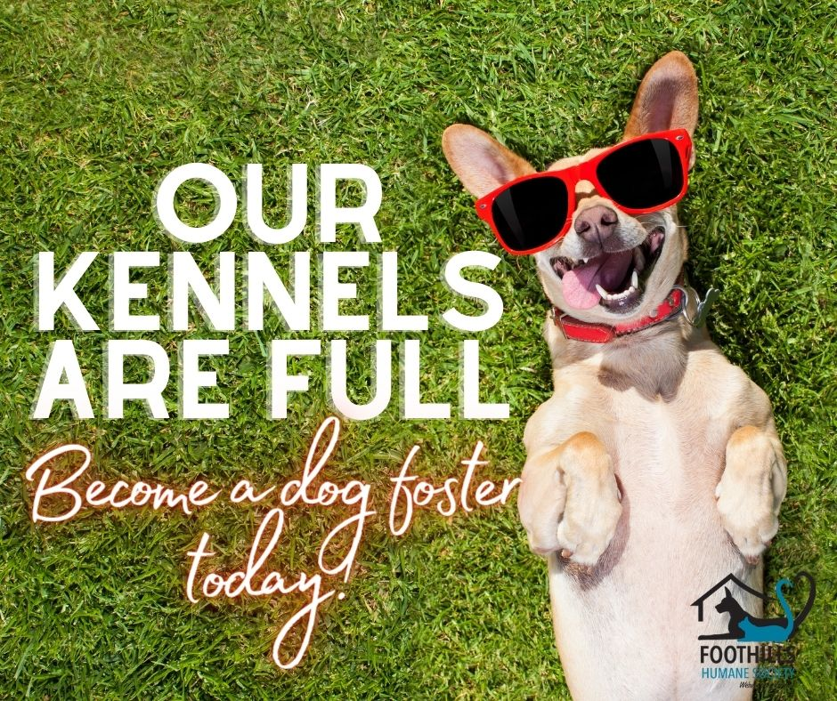 URGENT: We need large dog fosters!